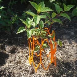 Опора для растений PROTEX